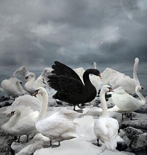 profit   mother   black swans