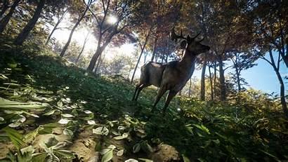 Wild Call Hunter Thehunter 4k Wallpapers Nature
