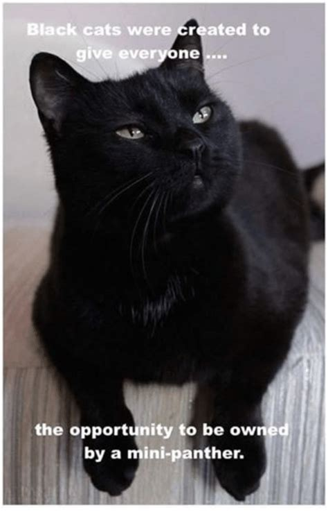 Black Cat Meme - black cats were created to give everyone the opportunity to be owned by a mini panther cats