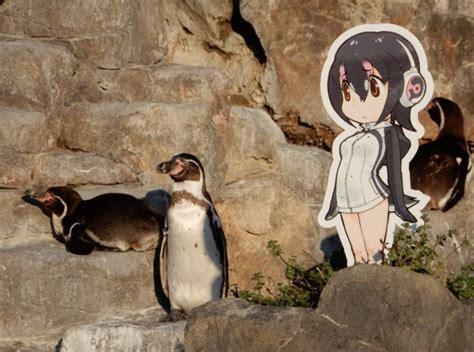 humboldt penguin japari library  kemono friends wiki