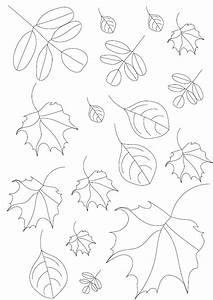 Feuilles D Automne à Imprimer : automne coloriage des feuilles d automne imprimer ~ Nature-et-papiers.com Idées de Décoration