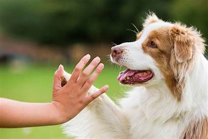 Five Train Dog Easy Training Puppies Pets