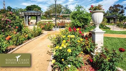 Garden Zoom Backgrounds Virtual Rose Boss Botanic