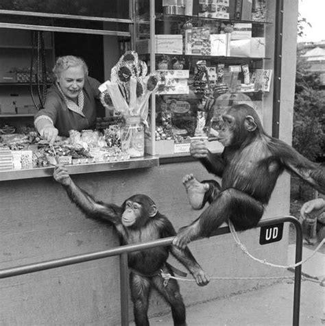 zoo copenhagen 1955 tour denmark went