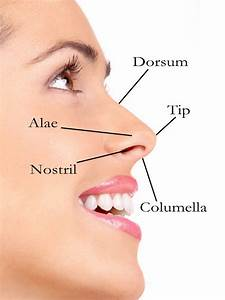 External Nose Anatomy Diagram