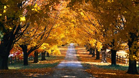 Autumn Wallpapers For Mac by Tree Tunnel Road Autumn Mac Wallpaper