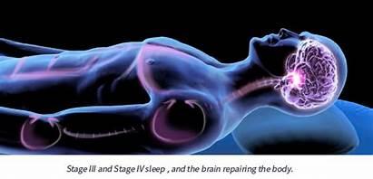 Sleep Chronic Pain Repairs During Intellibed Relief