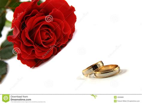 wedding rings with roses wedding rings and roses royalty free stock images image