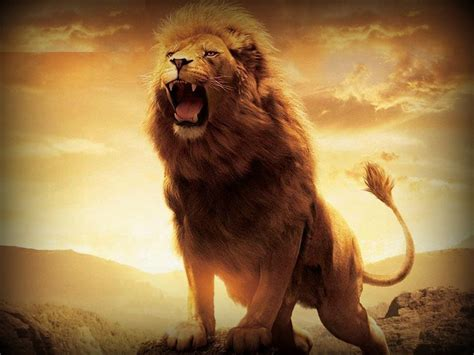 Lion Hd Wallpapers  Lion Hd Pictures  Free Download Hd