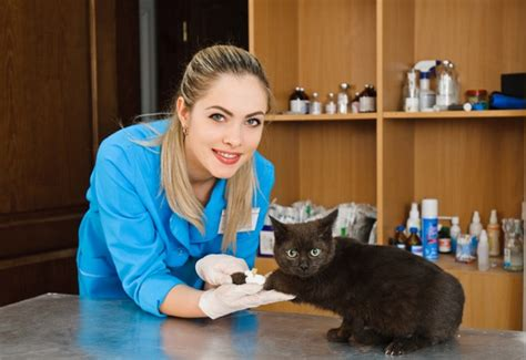 when to take kitten to vet 5 reasons to consider a cat only veterinary clinic catster