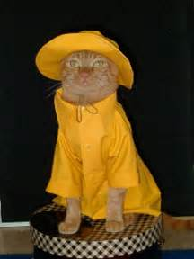 Cat in Rain Coat