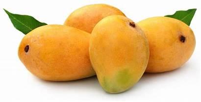 Mango Economy Pakistan Technology Help Mangoes Fresh