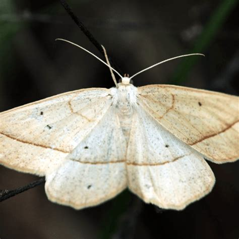 how to get rid of moths how to get rid of stuff