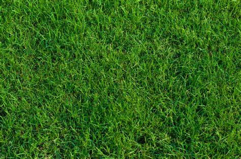 lawn grass types in india care for your bermuda grass turf masters lawn care