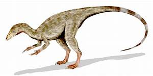 Old Earth Ministries Online Dinosaur Curriculum, Compsognathus