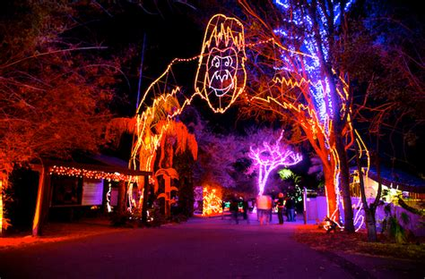 brew lights at zoo lights the holiday events across the valley that you must not