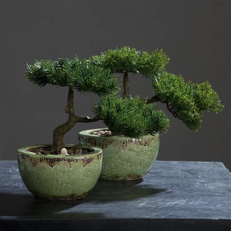 Bonsai Baum Preis by Bonsai Baum Preis Bonsai Baum Kaufen Und Richtig Pflegen