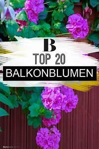 Blumen Für Südbalkon : die top 20 der balkonblumen bald wird 39 s bunt garten ~ Watch28wear.com Haus und Dekorationen