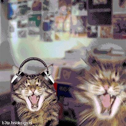 Dj Gifs Animated Cat Kitty Stuff Cats