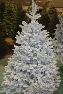deerbrooke farm photo gallery premium christmas tree lot in las vegas nevada