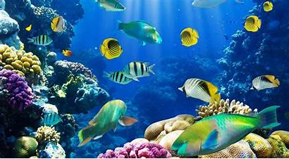 Fish Desktop Wallpapers Tropical