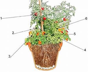 Kräuter Zusammen Pflanzen : kr uter und tomatentopf in n hrstoffreiche erde pflanzen ~ Whattoseeinmadrid.com Haus und Dekorationen