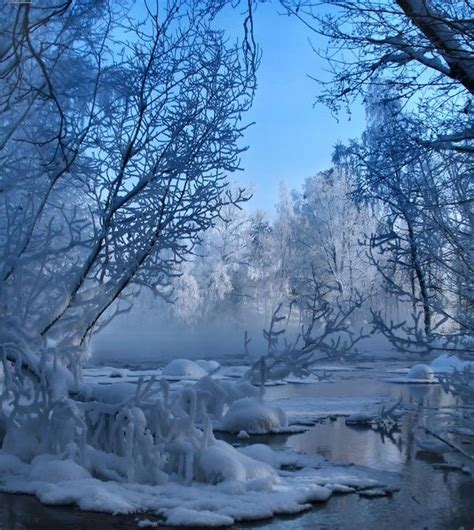 Best 25+ Snow Covered Trees Ideas On Pinterest  Winter Snow, Winter Beauty And Snowy Forest