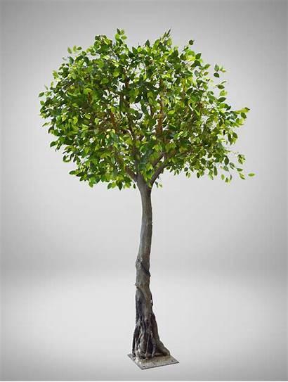 Deciduous Tree Trees Event Coast