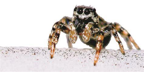 große spinnen im haus was tun thema des tages spinnen im anmarsch www sn de