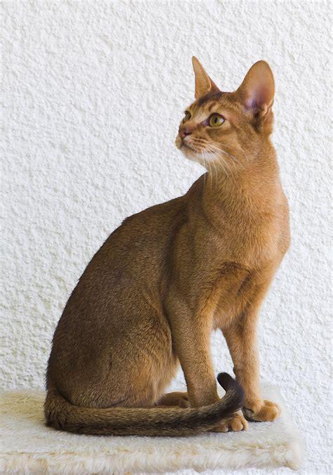 bred si鑒e social pisici inteligente click romania
