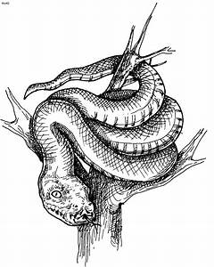 Snakes Coloring Pages - Kids Website For Parents