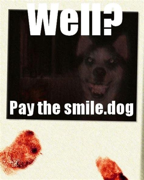 Smile Dog Meme - smile dog meme memes