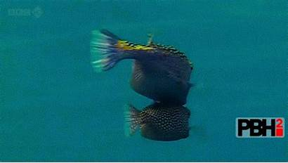 Fish Awesome Box Inventions Still Gifs Future