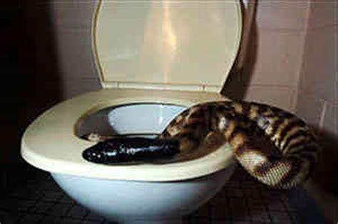 lucca escono serpenti dal wc