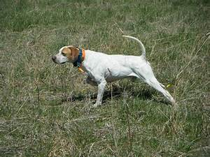 Types Of Hunting Dogs | www.pixshark.com - Images ...