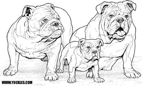 Amerikaanse Bulldog Kleurplaat by Bulldog Coloring Page By Yuckles