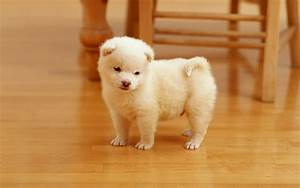 Free Wallpapers: Beautiful Cute Dogs And Disktop Wallpapers
