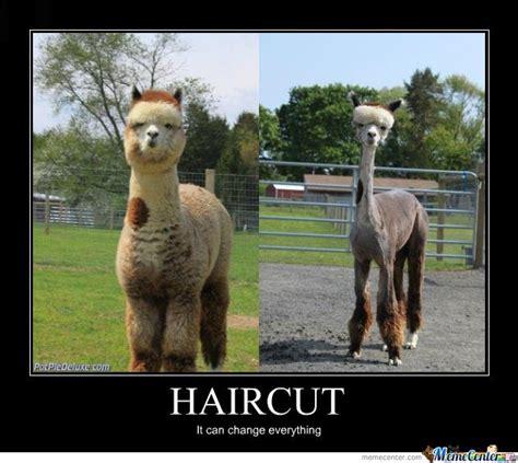 Haircut Meme - haircut by adysone meme center