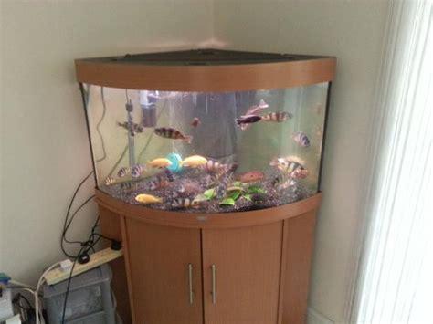 corner fish tank with cabinet juwel trigon 190 large corner fish tank full setup with
