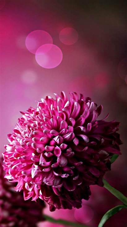 Phone Flower Flowers Wallpapers Purple Floral Mobile