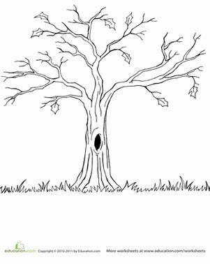 bare tree worksheet educationcom tree coloring page