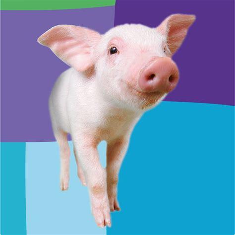 cerco animali da cortile in regalo regala un maiale oxfam italia oxfam italia