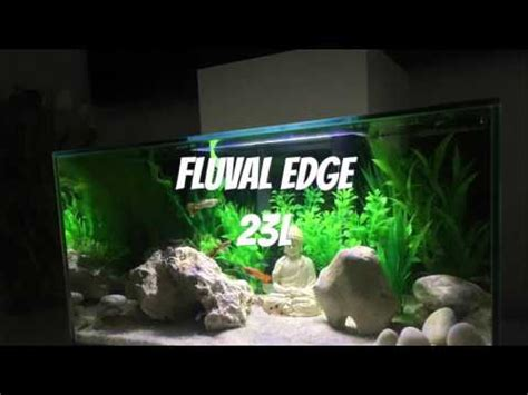 Fluval Edge 23 Litres Tropical Fish Set Up Youtube