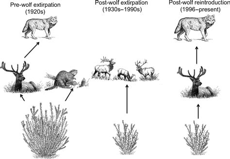 ecosystem context  historical contingency  apex
