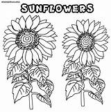 Sunflower Coloring Pages Adults Flower Sunflowers Colorings Nature sketch template