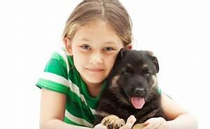Laisser Un Chien Seul Quand On Travaille : les chiens et les enfants conseils l intention des parents le chien de berger allemand ~ Medecine-chirurgie-esthetiques.com Avis de Voitures
