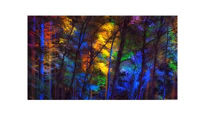 Colorful Forest Trees 4k Background Dual Wallpapers