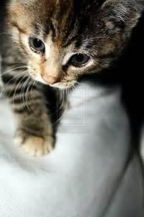 kitty cat kitty cat kitty cat by esuda on deviantart