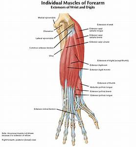 Lateral Epicondylitis  Tennis Elbow