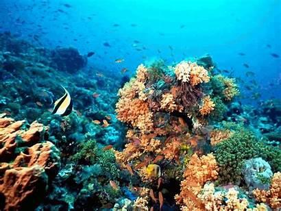 Coral Imagenes Reef Arrecife Gimp Animadas Ocean
